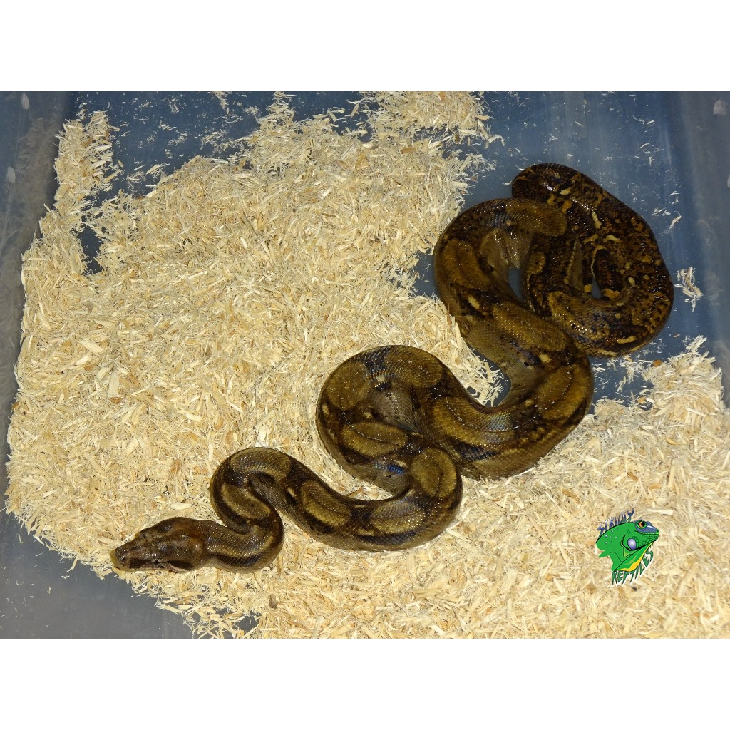 Exotic Pets Wholesale