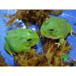 purchase Reptiles wholesale