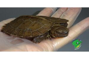 Buy Wholesale Reptiles Online