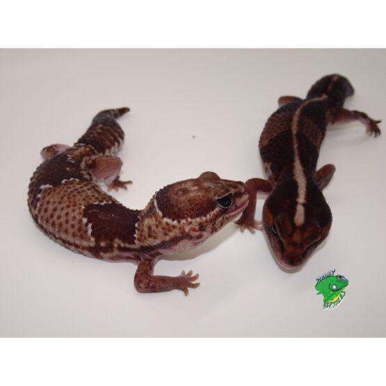 Wholesale Reptile Dealer