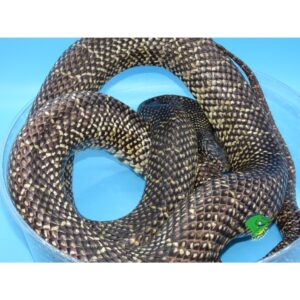 Wholesale Reptile Food Available